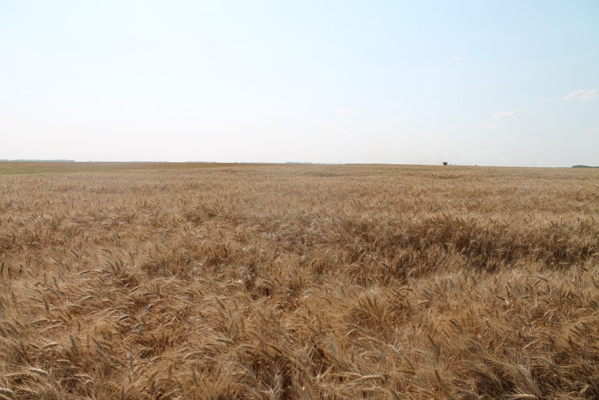 "The ""Vilion» company ha  completed the barley purcha e (harve t"